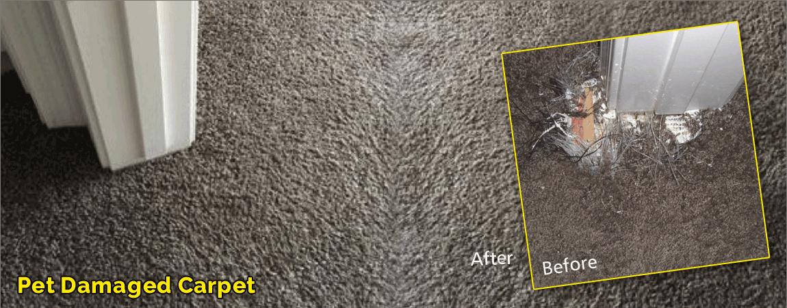 Pet Damaged Carpet Camarillo