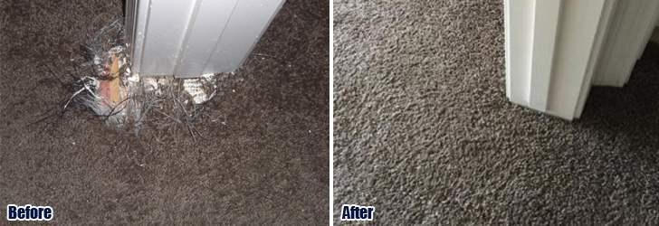 Pet Damaged Carpet 805 322 7831 1 Carpet Repair